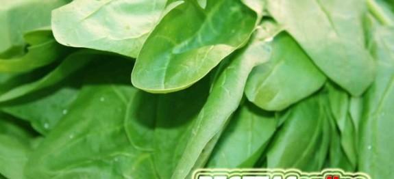 espinacas - Recetas de cocina RECETASonline