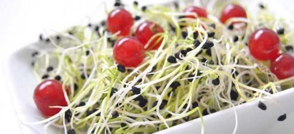 Ensalada-de-brotes-de-cebolla-y-grosellas---Recetas-de-cocina-RECETASonline